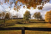 Scenic Horse Farm In Autumn