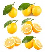 set pf 6 lemon images