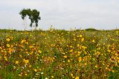Flowerses of the steppes