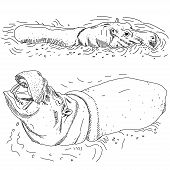 Hippos In Water Isolated Black Contour On White Background. Sketch