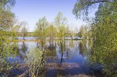 stock photo of scourge  - Trees standing in water on the river bank during the spring flood - JPG