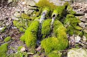 picture of waterspout  - Old green mossy stone fountain in Bulgaria - JPG