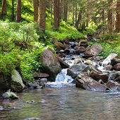 picture of coniferous forest  - A mountain river - JPG