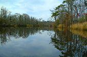 Alatamaha River Calm