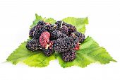 foto of mulberry  - Mulberries with leaf isolated on white background - JPG