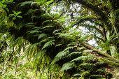 image of fern  - Ferns growing on a tree trunk in the rainforest - JPG