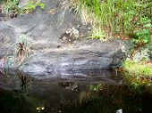 pic of rock carving  - Petroglyph carved into rock by early native inhabitants of St.. John