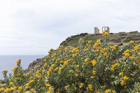 image of poseidon  - View of yellow flowers on a bush - JPG