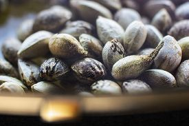picture of seed bearing  - Close view of a hemp seeds in a plate with golden edgings  - JPG