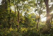 stock photo of humidity  - Subtropical deep and humid forest in Nepal - JPG