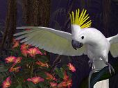 picture of palm cockatoo  - 3d - JPG