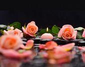 foto of stone-therapy  - Beautiful orange rose  - JPG