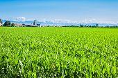 pic of maize  - Agricultural landscape  - JPG