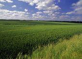 Farmland With Cereal Crops