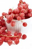 picture of ice crystal  - Frozen currants with stems covered with ice crystals in white porcelain bowl on a white background - JPG