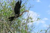 stock photo of jungle snake  - snake neck bird in Madidi Park - JPG