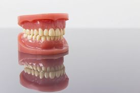 stock photo of false teeth  - Set of artificial lower and upper jaw false teeth viewed low angle across a wooden table with copyspace - JPG
