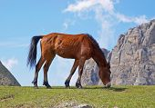 Young horse eating green grass
