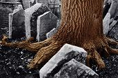 A huge trunk of tree among ancient tombstones in old jewish cemetery in Old Town of Prague, Czech re