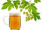 Mug of beer and fresh hops on white background