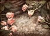 foto of obituary  - Grungy pink roses composition on stones with waterdrops - JPG