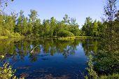 Summer. Wild deserted lake.