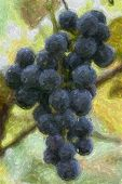 Bunch Of Concord Grapes With Fine Art Paint Filter