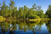 Paisagem de madeira e Lago pequena.