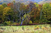 Autumn In Romania 1