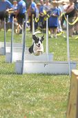 Flyball 4979