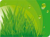 Green grass. Vector.