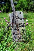 Thick, Wooden Fence Post Has Extra Large Rusty Nail Protruding From Its Side.  Barbed Wire Fence Is  poster