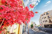 France, Perpignan. Beautiful Summer Street With Red Pink Flowers Bush. Blooming Street Decorated Wit poster