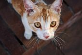 Portrait Of Poor Red Homeless Cat With Sad Yellow Eyes. Lonely, Hoping For Shelter Look. poster