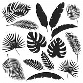 Set Vector Silhouettes Tropical Leaves. Monochrome Jungle Exotic Leaf Philodendron, Areca Palm, Roya poster