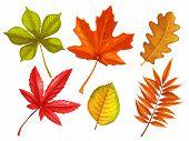 Set Autumn Leaves Maple, Oak, Elm, Chestnut, Japanese Maple And Rhus Typhina. Vector Illustration. C poster