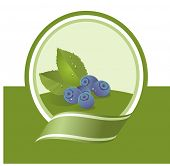 fresh bilberry illustration, vector label