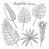 Set Of Tropical, Exotic, Jungle Plant Leaves - Monstera, Areca, Banana, Fan Palm And Protea, Hand-dr poster