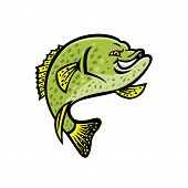 Mascot Icon Illustration Of A Crappie, Papermouth, Strawberry Bass, Speckled Bass, Specks, Speckled  poster
