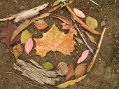 a circle of natural objects