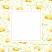 White Indian Lotus Banner Card Border. Nelumbo Nucifera,sacred Lotus, Bean Of India, Egyptian Bean.  poster