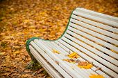 White Bench In The Autumn Park.bench In Autumn Landscape, City Park With Orange Maple Leaves On The  poster