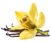 Dried vanilla fruits and orchid vanilla flower isolated on white background. Clipping path. poster