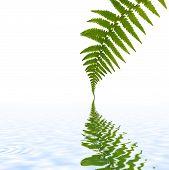 Fern Leaf Simplicity