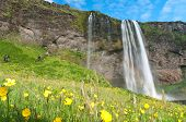 Famous Seljalandsfoss Waterfall Of Iceland
