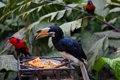 Exotic birds at a feeding trough in Park of Birds to Bali
