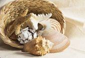 Shells In A Basket