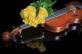 Violine und gelben Rosen