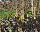 Bog At Early Spring Time