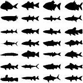 Silhueta de peixe